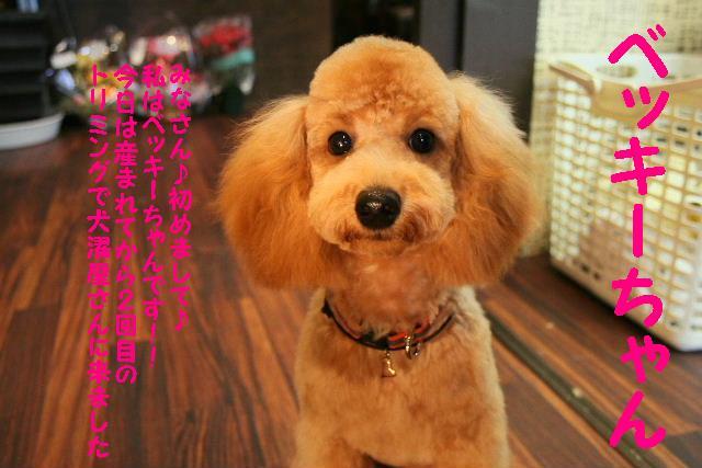 眩しい~~~!!&幸せ♪_b0130018_14335360.jpg