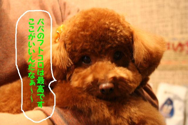 眩しい~~~!!&幸せ♪_b0130018_14354896.jpg