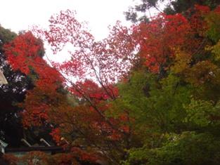 秋といえば・・♪_b0086532_223033.jpg