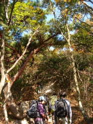 御在所岳 中道を登る 1212m  三重県_d0055236_844327.jpg
