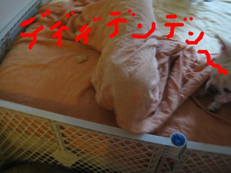 c0132537_525437.jpg
