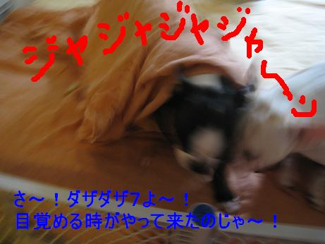 c0132537_5271469.jpg