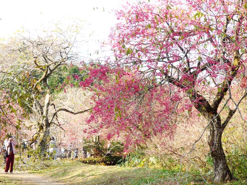 バスハイク in 岡山森林公園 11月8日_c0218841_22453354.jpg
