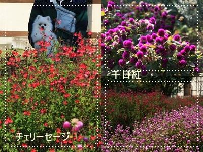 d0054461_18551964.jpg