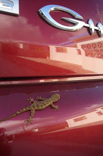 gecko._c0153966_19154199.jpg