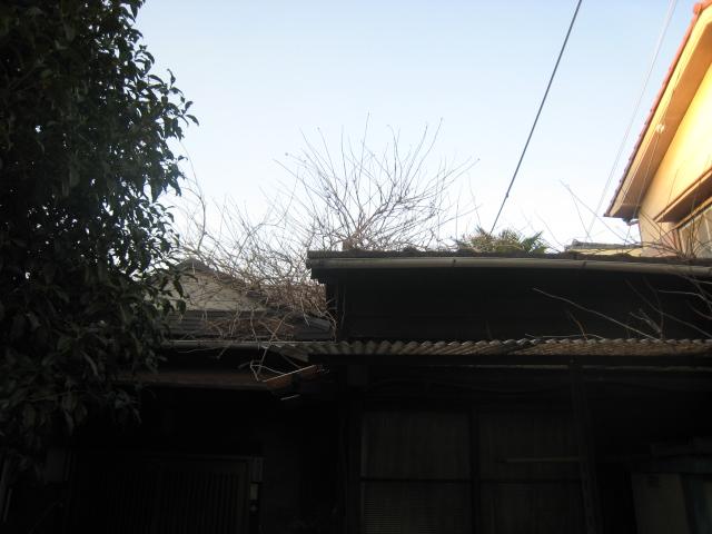b0137082_19584348.jpg