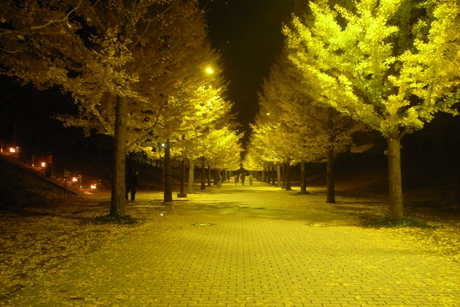 イチョウ並木のライトアップ@あづま総合運動公園。_c0141989_059354.jpg