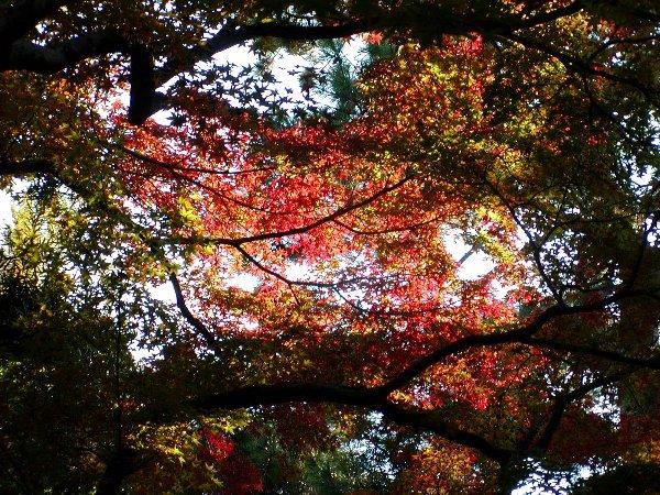 御所の秋色 その2_c0057390_22435914.jpg