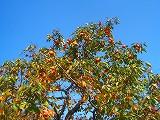 秋です! 畑の実りです!_a0130305_17573583.jpg