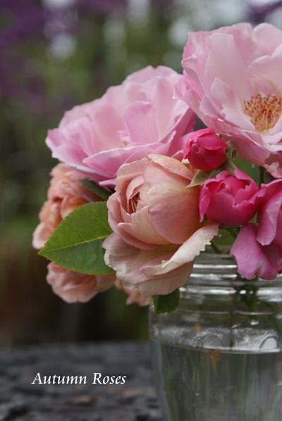 Autumn Roses_d0107929_23242475.jpg