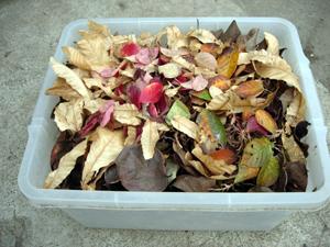 庭の枯葉で_e0097534_15153091.jpg