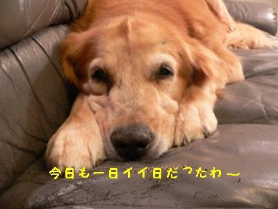 f0118135_226321.jpg