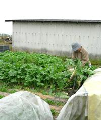 Zの社会見学〜お野菜のふるさと探訪〜_a0017350_23501750.jpg