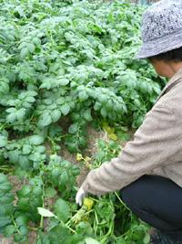 Zの社会見学〜お野菜のふるさと探訪〜_a0017350_23503860.jpg