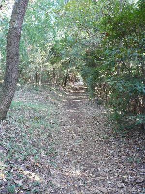 秋の田舎の散歩路_f0193752_2112118.jpg