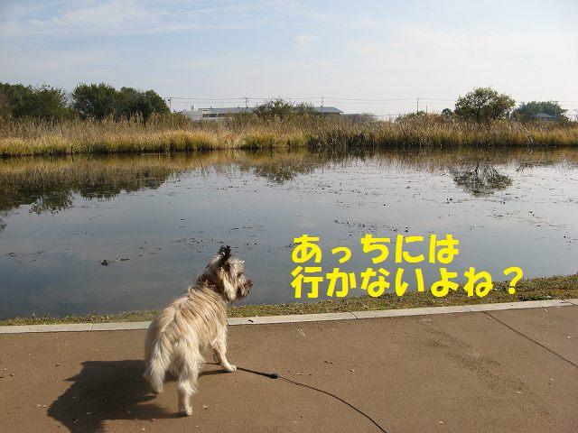 c0202659_1392832.jpg