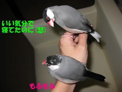 b0158061_214105.jpg