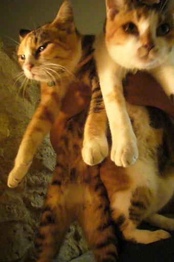 lovely cats._c0153966_20523494.jpg