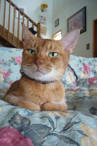 lovely cats._c0153966_2117889.jpg