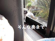 c0139488_1684685.jpg