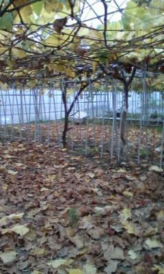 干し柿作りが終わって。_d0026905_1120236.jpg
