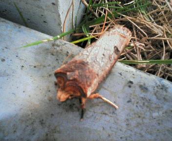 ちぎれた小枝のような虫を発見_b0025008_16585797.jpg