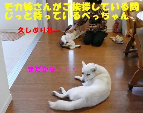 f0121712_2242459.jpg