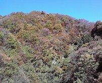 黒部峡谷トロッコ電車_b0134915_15542991.jpg