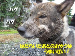 f0143123_204898.jpg