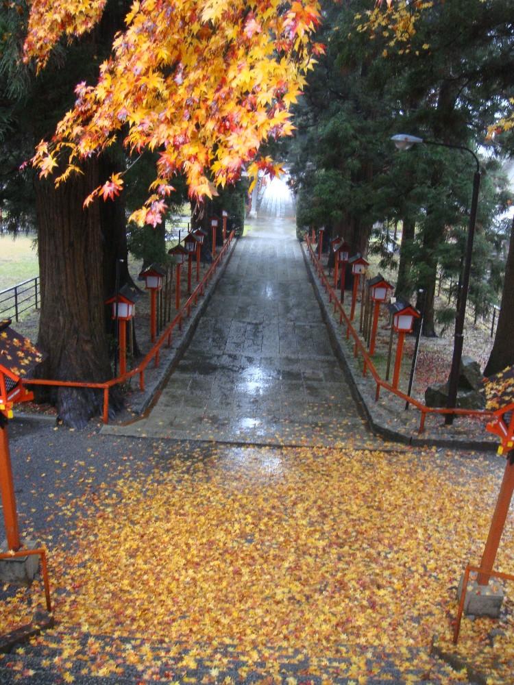 雨の一日_c0111229_20391012.jpg