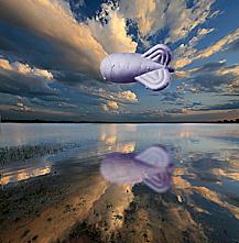 d0136354_623417.jpg