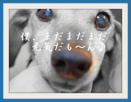 b0112758_20141025.jpg