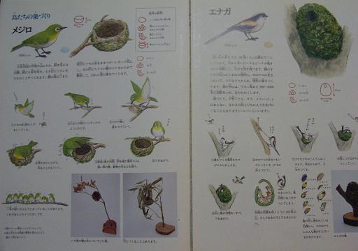 鳥の巣の本_e0160269_159723.jpg