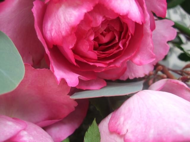 オークリーフ(バラとポプラスベリーの花束)_f0049672_18194239.jpg