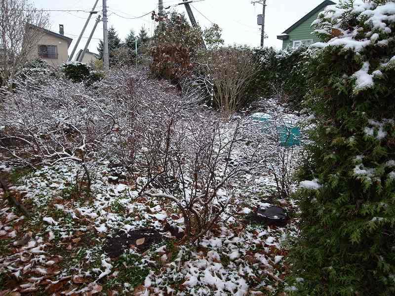 初の積雪_f0138096_1224487.jpg