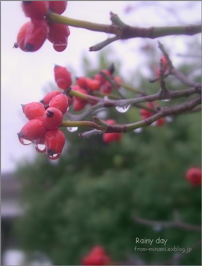 Rainy day_e0184300_10544993.jpg