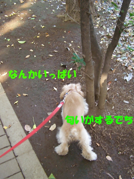 b0067012_17571810.jpg