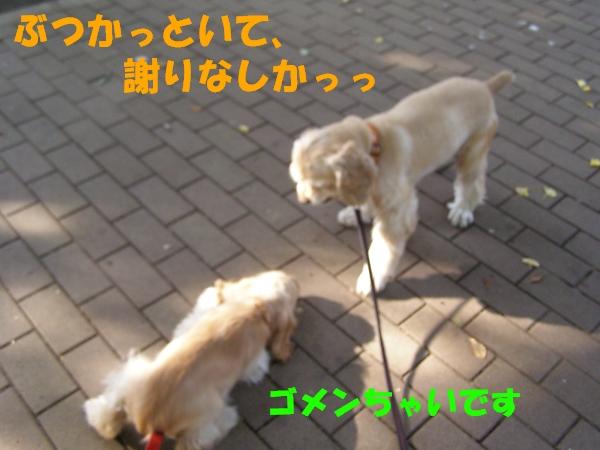b0067012_1757469.jpg