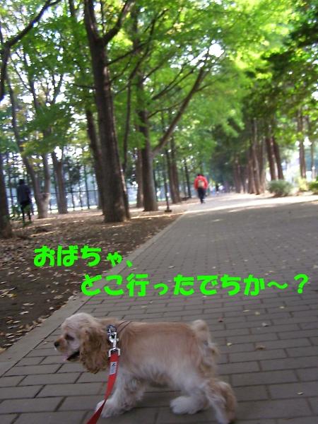 b0067012_1758230.jpg