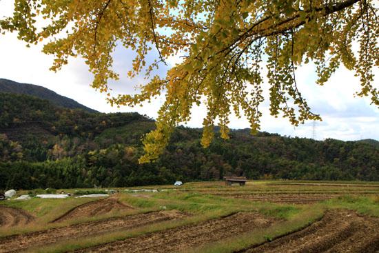 越畑の樒原_e0048413_2023361.jpg