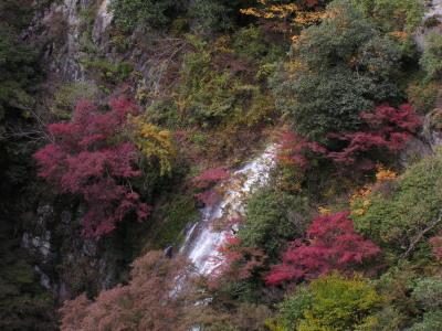 第2回箕面の山の自然の魅力を探るハイキング_f0009128_18102641.jpg