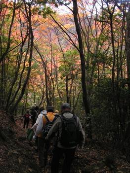 第2回箕面の山の自然の魅力を探るハイキング_f0009128_182333.jpg