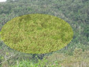 f0143445_1955664.jpg