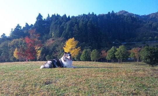 autumn_f0126965_12355627.jpg
