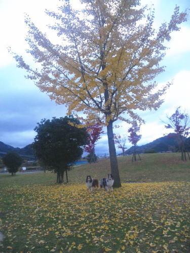autumn_f0126965_12375583.jpg