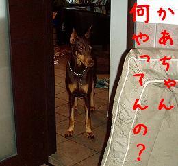 b0003270_16413726.jpg