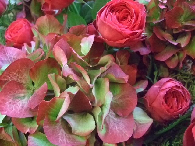 オークリーフ(レッドラナンキュラと赤い紫陽花のアレンジメント)_f0049672_14504549.jpg