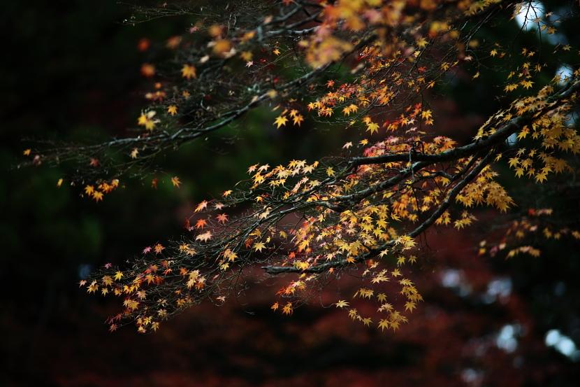 秋艶_f0195893_727227.jpg