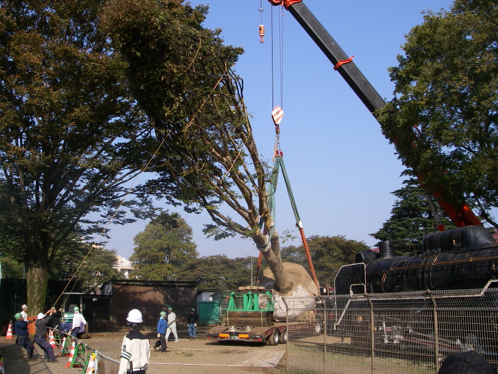 巨木の移植_b0172896_19285866.jpg