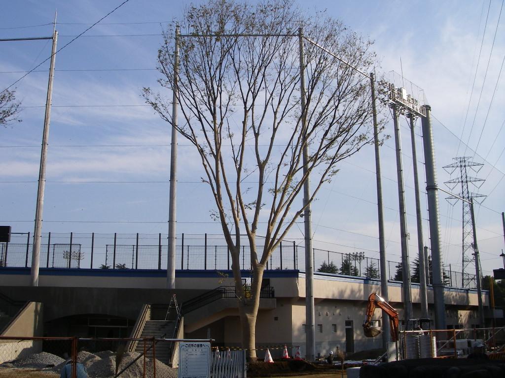 巨木の移植_b0172896_19375558.jpg